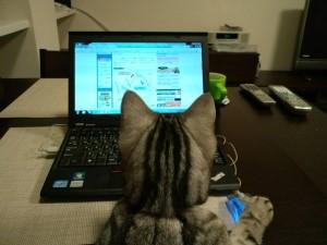 マイクロソフトパソコンができるネコの画像募集